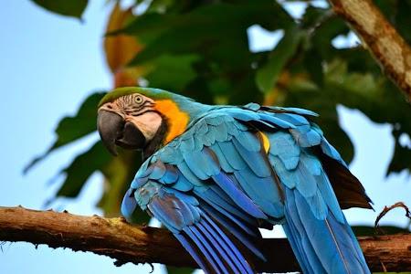 Jungla amazoniana: Papagalul Pepe