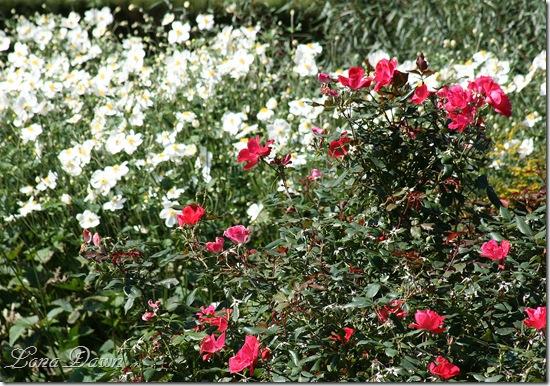 FPC_Roses_Anemones