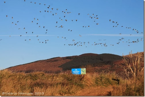 48-geese-and-sign