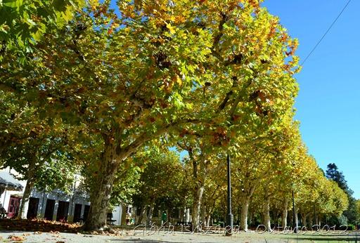 Glória Ishizaka - Folhas de Outono - Portugal 6