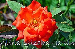 22 - Glória Ishizaka - Rosas do Jardim Botânico Nagai - Osaka