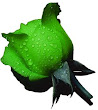 Green Rose Wallpaper