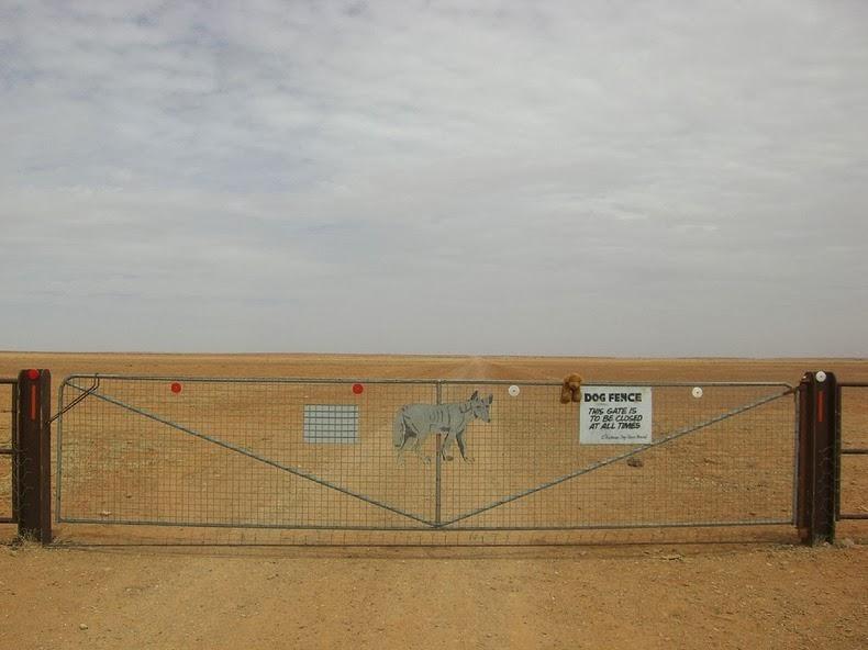 dingo-fence-5