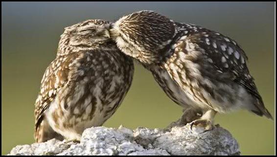 Búhos cariñosos