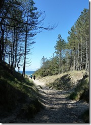 forest to beach