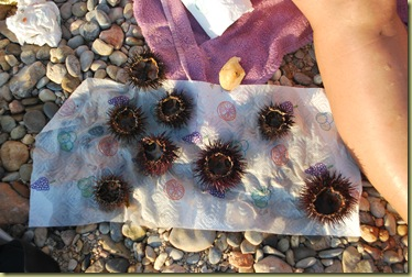 Sea urchins - Catched by Claudie