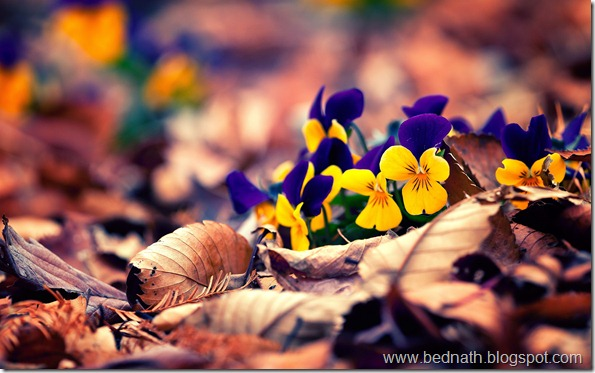 autumn-leaves-flowers