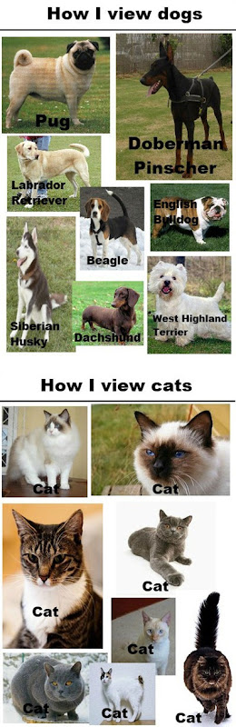 funny-dogs-cats-races-names