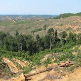 Rh Irai周辺の新規アカシア植林地(SPF社コンセッション) / Newly planted acacia plantation around Rh Irai