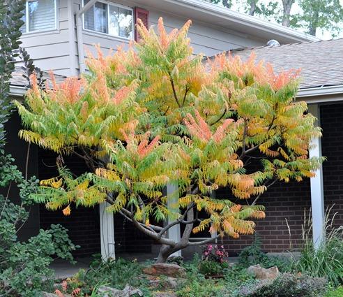 2012-10-03 tree (2)