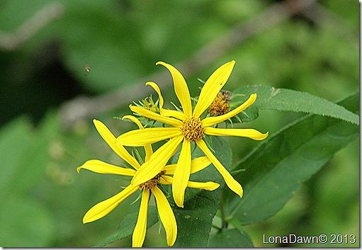 Woodland_Sunflowers