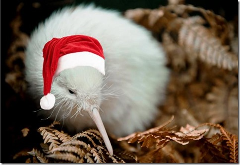 Manukura Little White Kiwi