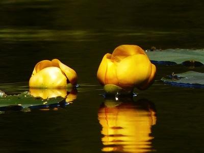 14 Trillium Lake 024