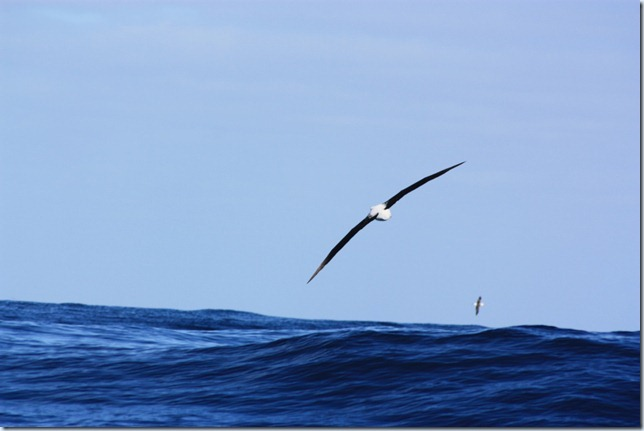 Pelagic 18 August 2012 020_small