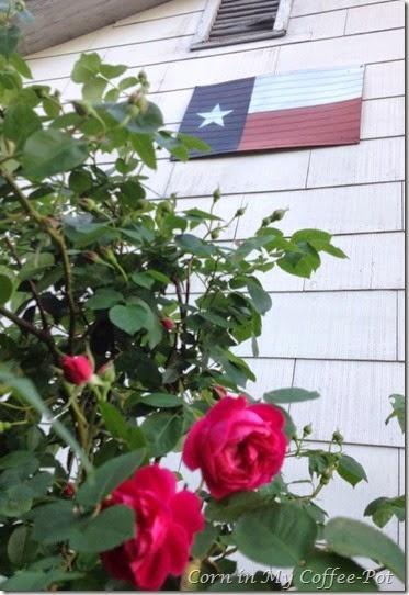 RosesMay24