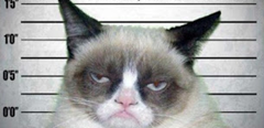 1angry kitty.jpg - Windows Photo Viewer (03-02-2013 14.30.45)
