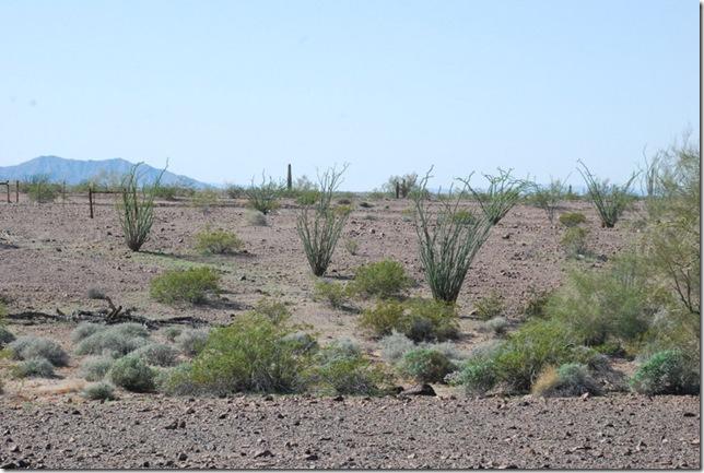 03-07-13 A Quartzsite Rock Alignment 025
