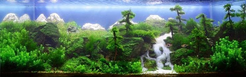 landscape aquarium