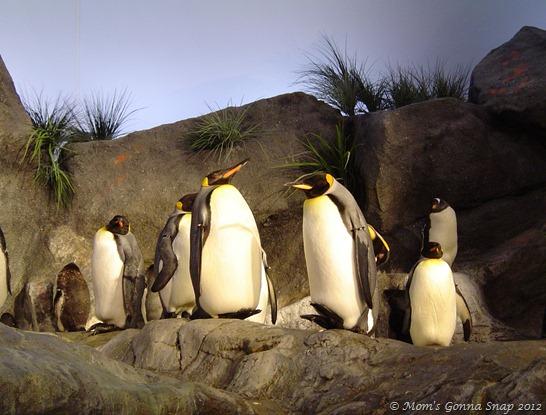2004-04-07 St. Louis Zoo (39)