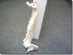 Your Spine Deserves Better!