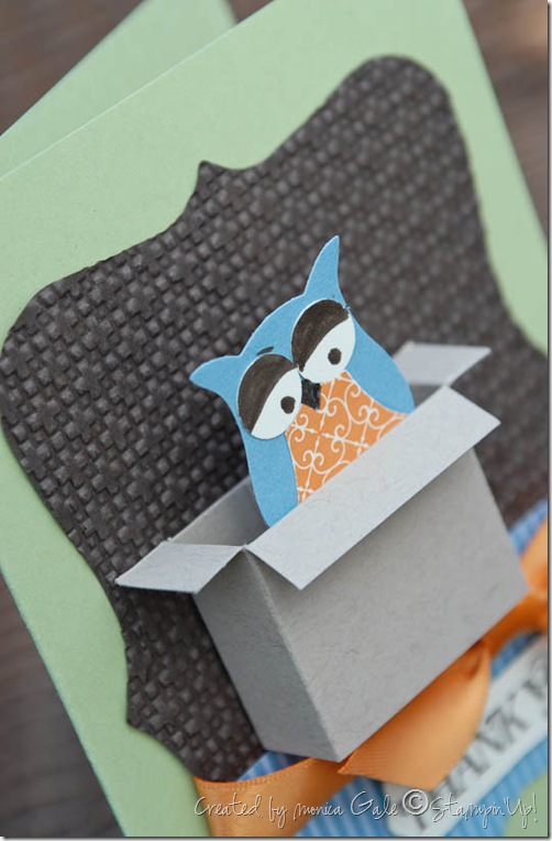 owl box close