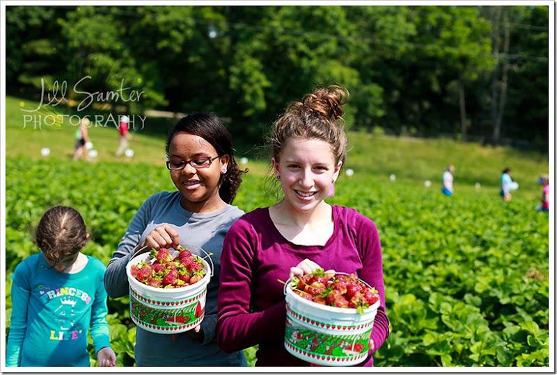 strawberryfields-4969