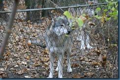 2011-11-28 Wildwood 102