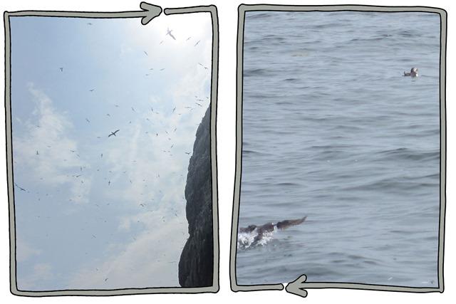 up-down-seabird-safari