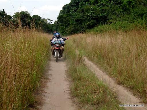 La route entre Dingi et Tshombe-Kilima dans le nord ouest du Maniema. Seuls les motos et tolekas peuvent circuler aujourd'hui sur ce tronçon,  comme la plupart des routes de la province aujourd'hui. Photo: bonoboincongo.com 2010.