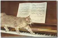 gato pianista blogdeimagenes (12)