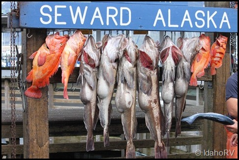 Fish-at-Seward