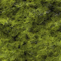 Seamless backgrounds of mosses16