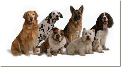 adiestramiento Canino1
