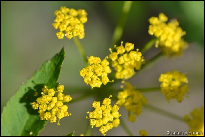 DSC_0997 (2)