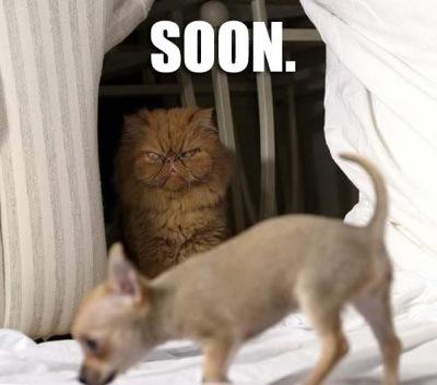 Soon2
