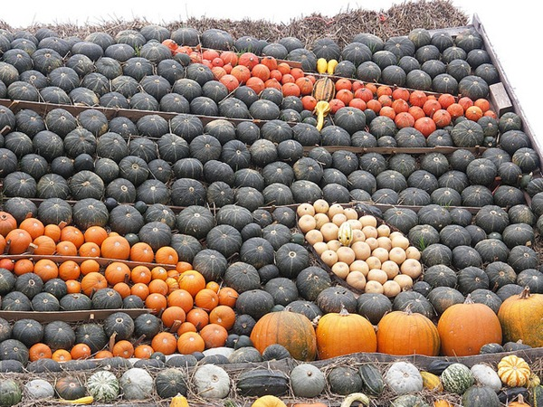slindon west sussex pumking gourd squash display 7