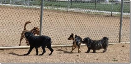 Dog Park Prescott Valley (Skruffy & Bubba)