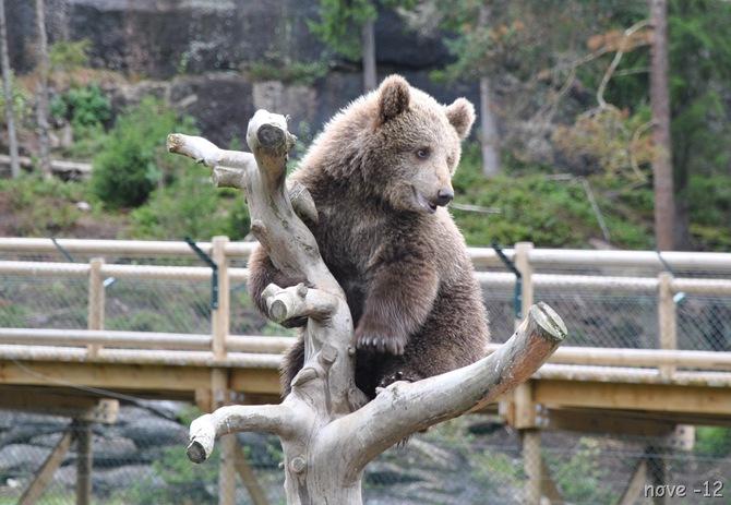 Bjørneparken 089