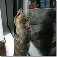 kitty002