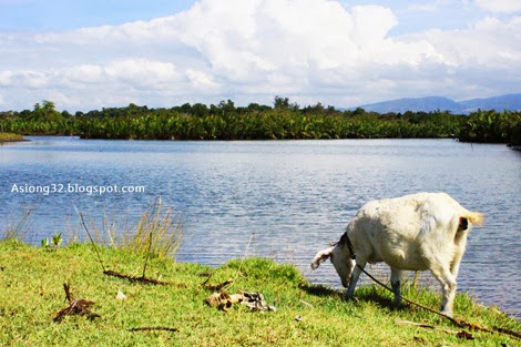 http://asiong32.blogspot.com/2013/12/xmas-at-zambales-personal-post.html