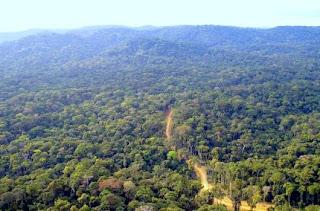 Forêt du bassin du Congo. cbfp.org