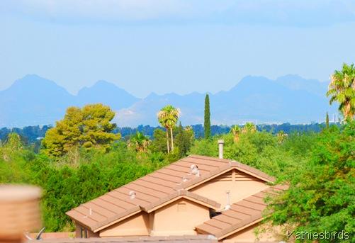 6. Tucson mts-kab