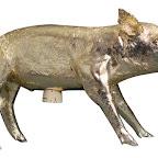 Gold Pig.jpg