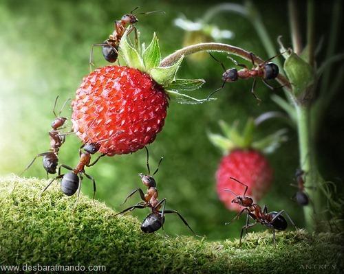 formigas inacreditaveis incriveis desbaratinando  (12)