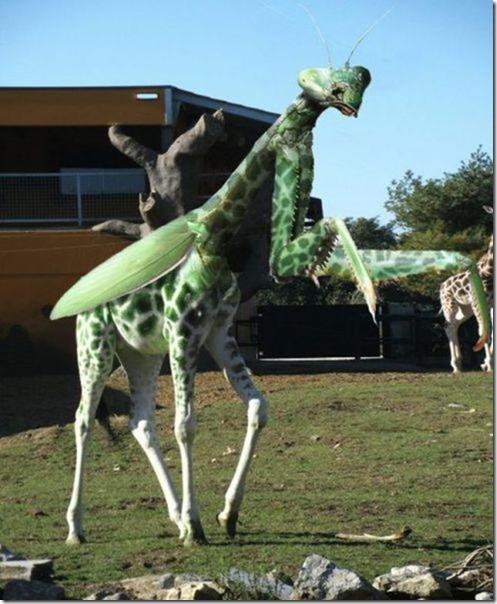hybrid-animals-photoshop-11