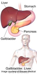 Gallbladder-Liver-Pancreas-Location