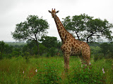 South Africa - 058.JPG