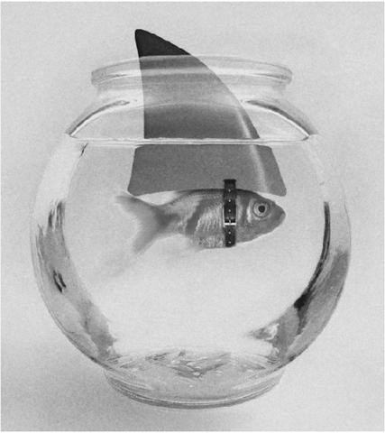 egolu balık