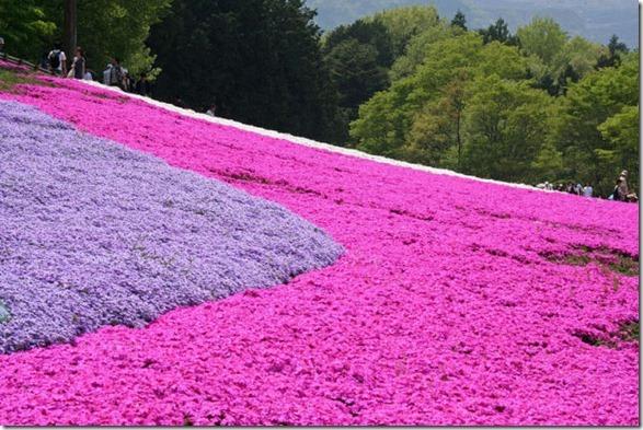 pink-park-japan-7