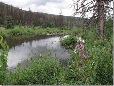 410 Beaver Pond (640x480)